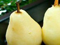 Somerset Pears